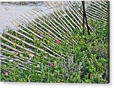 Beach Flowers Acrylic Print by JC Findley