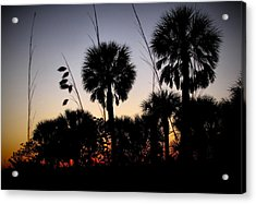 Beach Foliage At Sunset Acrylic Print by Phil Penne