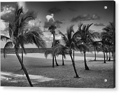 Beach Foliage Acrylic Print