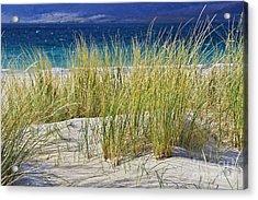 Beach Gras Acrylic Print