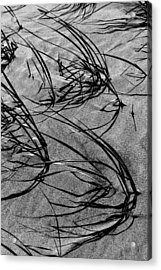 Beach Grass Black And White Acrylic Print by Mary Bedy