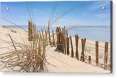 Beach Grass II Acrylic Print by Dapixara Art