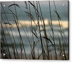 Acrylic Print featuring the photograph Beach Grass by Kimberly Mackowski