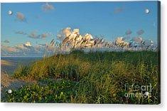 Beach Greenery Panorama Acrylic Print by Bob Sample