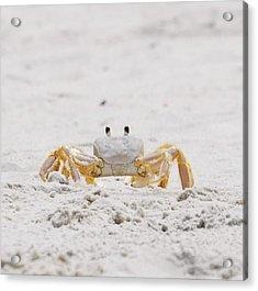 Acrylic Print featuring the photograph Beach Guard by Judy Hall-Folde