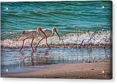 Beach Jogging In Twos Acrylic Print by Hanny Heim