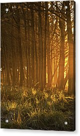 Acrylic Print featuring the photograph Beach Light Through The Trees by Judi Baker