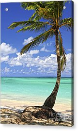 Beach Of A Tropical Island Acrylic Print by Elena Elisseeva