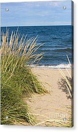Beach Path Acrylic Print by Barbara McMahon