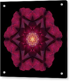 Acrylic Print featuring the photograph Beach Rose I Flower Mandala by David J Bookbinder