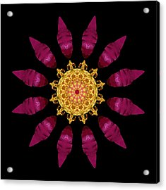 Acrylic Print featuring the photograph Beach Rose Iv Flower Mandala by David J Bookbinder