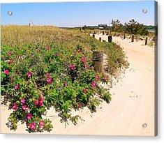 Beach Roses Acrylic Print by Janice Drew