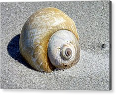 Acrylic Print featuring the photograph Beach Shell by Janice Drew
