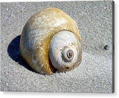 Beach Shell Acrylic Print by Janice Drew