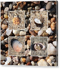 Beach Shells And Rocks Collage Acrylic Print