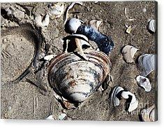 Beach Shells Acrylic Print by John Rizzuto