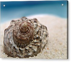 Acrylic Print featuring the photograph Beach Treasure by Micki Findlay