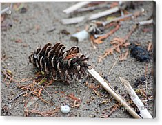 Acrylic Print featuring the photograph Beach Treasures by Bianca Nadeau