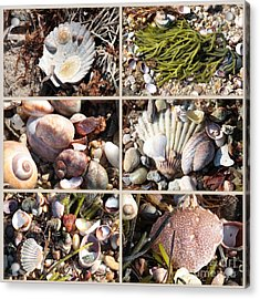 Beach Treasures Acrylic Print by Carol Groenen