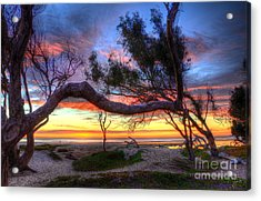 Beach Tree Sunset View Acrylic Print