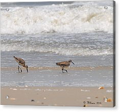 Beach Walk Acrylic Print by Dan Williams