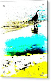 Beachcomber Acrylic Print by Brian D Meredith