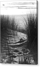 Acrylic Print featuring the photograph Beachgrass by Adria Trail