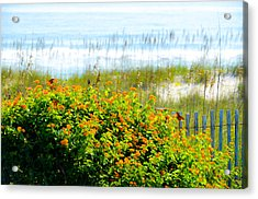 Beachy Butterflies  Acrylic Print