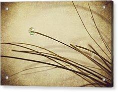 Bead Acrylic Print by Svetlana Sewell