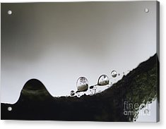 Beads Of Rain With Particles Floating Acrylic Print by Dan Friend