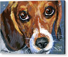 Beagle Acrylic Print by Hope Lane