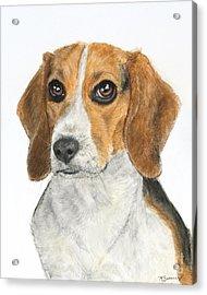 Beagle Painting Acrylic Print