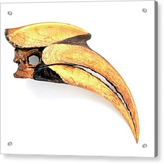 Beak Of Great Hornbill (buceros Bicornis) Acrylic Print