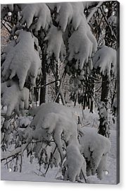 Acrylic Print featuring the photograph Bear Claws by Winifred Butler