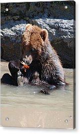 Bear Cub Acrylic Print by DejaVu Designs