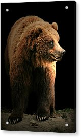 Bear Essentials Acrylic Print