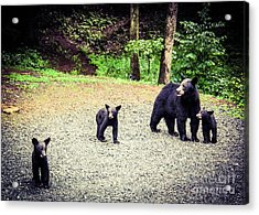 Acrylic Print featuring the photograph Bear Family Affair by Jan Dappen