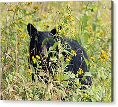 Hey I'm Looking At You. Cades Cove Acrylic Print