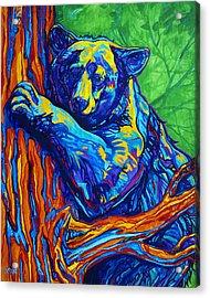 Bear Hug Acrylic Print by Derrick Higgins
