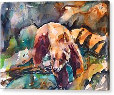 Bear In Rocks Acrylic Print by P Maure Bausch