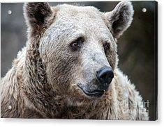 Bear Necessities Acrylic Print