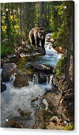 Bear Necessity Acrylic Print