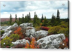 Bear Rocks Acrylic Print