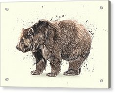 Bear Study Acrylic Print
