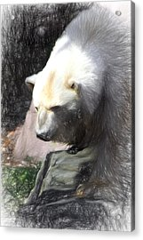 Acrylic Print featuring the digital art Bear Visions by Terry Cork
