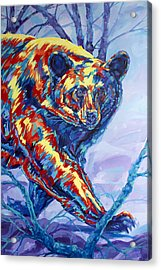 Bear Walk Acrylic Print by Derrick Higgins