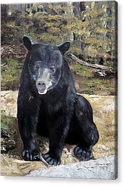 Acrylic Print featuring the painting Bear - Wildlife Art - Ursus Americanus by Jan Dappen