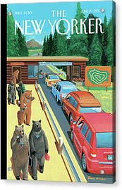 Bears Leaving Work At A National Park Acrylic Print