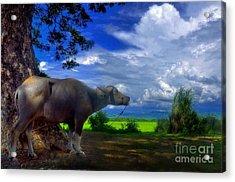 Beast Of Burden Acrylic Print by George Paris