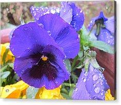 Beauties In The Rain Acrylic Print